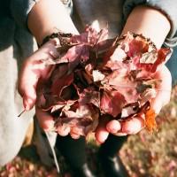 leaves-925118_640