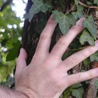 hand-94894_640