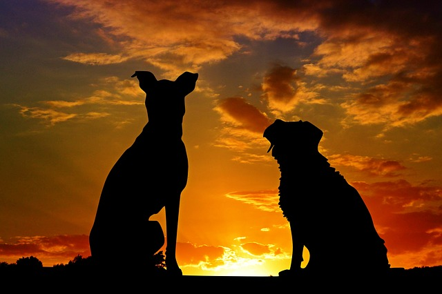 dogs-2222801_640